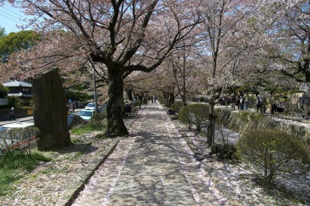 京都花見スポット