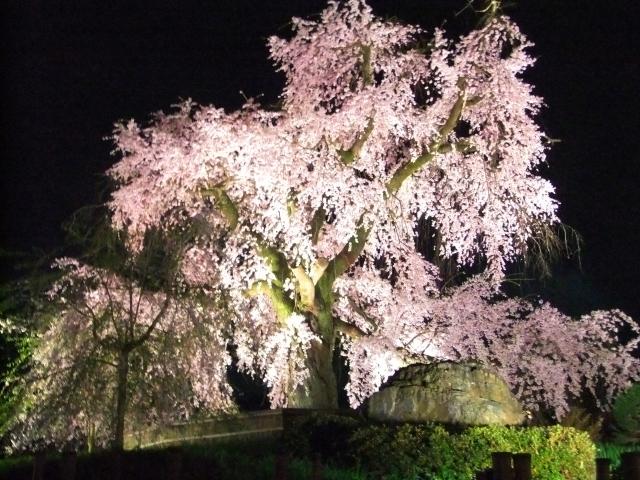 京都のおすすめ花見スポット