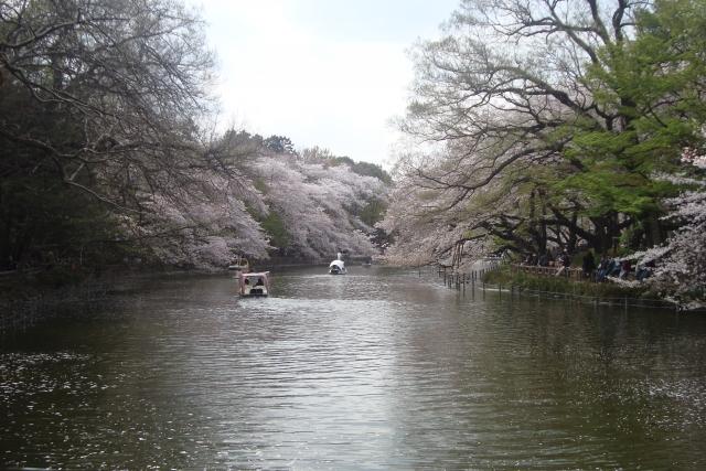 東京で宴会ができる花見スポット